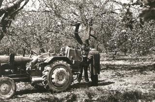 Sad owocowy w Mikołajówce 1972r.